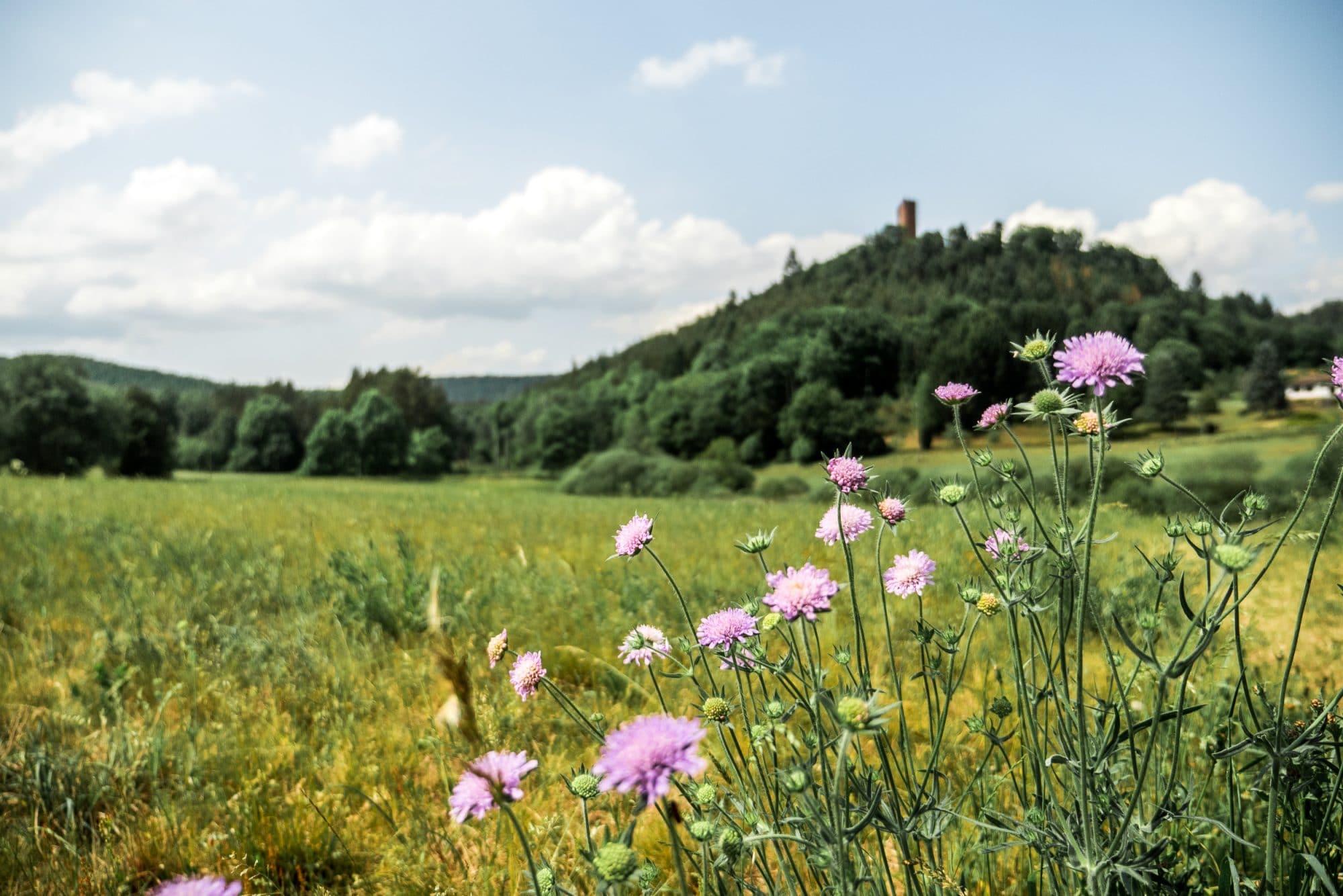 Image Escapade au Pays de Bitche, ce petit Eden des Vosges du Nord