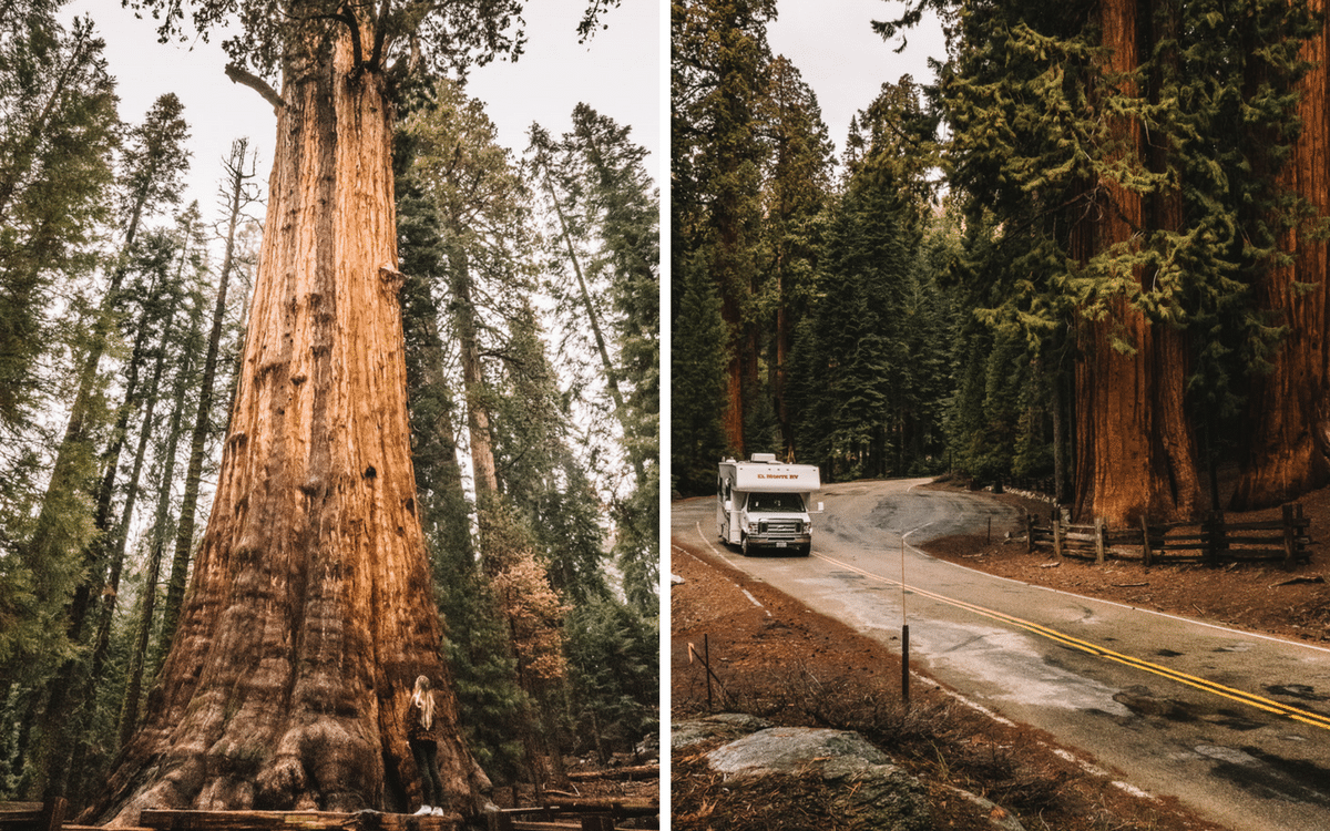 Road trip californie-Sequoia national Park-que faire en californie-parc national