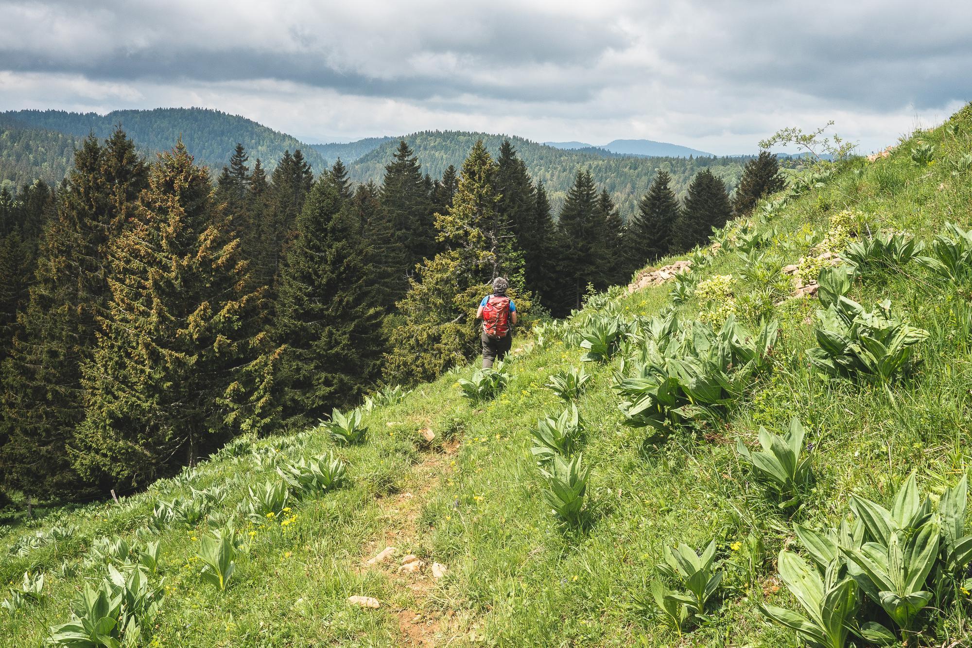 Montagnes du Jura, randonnée, crêt au merle, borne au lion
