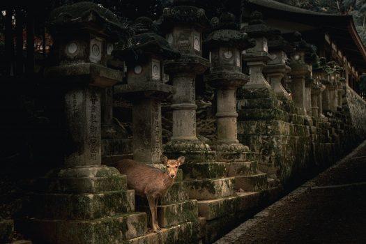 Image 5 jours dans la Préfecture de Nara   Que faire, que voir? Mes recommandations et bonnes adresses