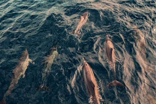Image Voyage à la Réunion | Découvrez mes immanquables à voir et à faire sur l'île intense